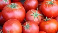Доматите, които всъщност са плодове, а не зеленчуци, както много хора мислят, съдържат много полезни за организма вещества. Заради разнообразните начини, по които се приготвят, те могат да допринасят […]